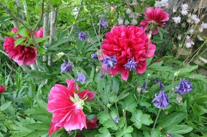 Motivating beauties - symbols of our gardening hopes